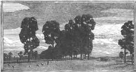 wood-engraving of The Gooseherd or Les Oies